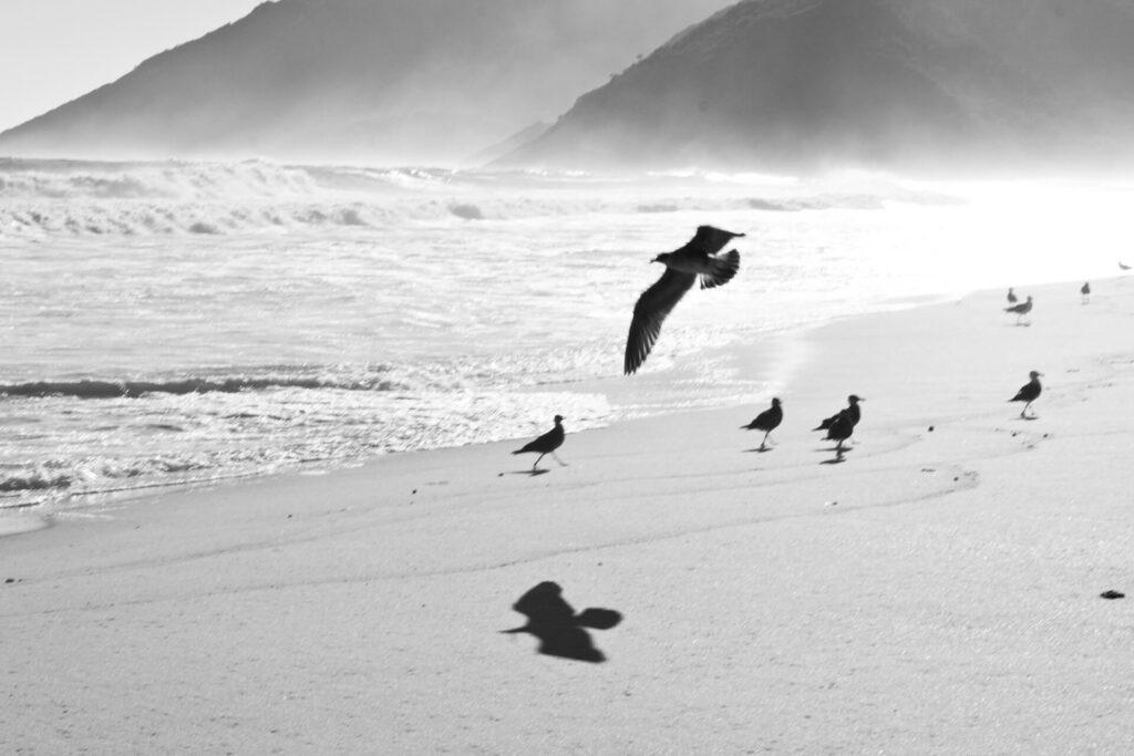 Na praia deserta um pássaro persegue a sombra. Névoa marinha.